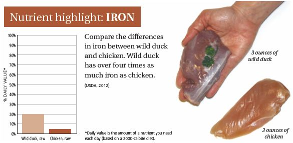 DUCK- nutrient highlight iron